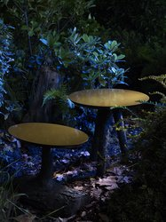 Tables: Sunny Forest